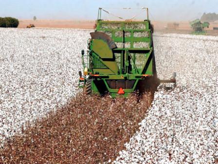 São Desidério é líder nacional em produção agrícola, diz IBGE