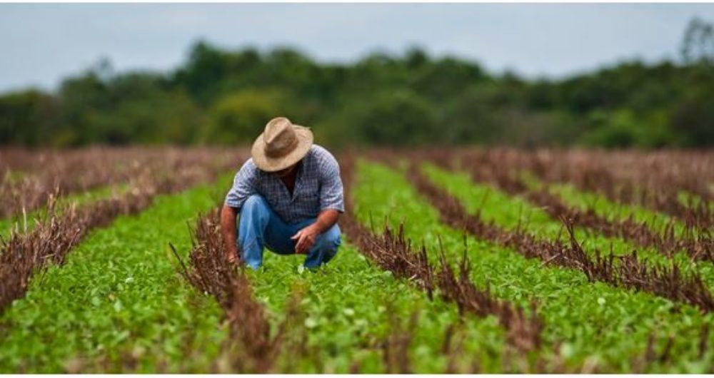 Resultado de imagem para agricultura no oeste da bahia