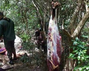 Fotos: carne de cavalo que seria vendida como se fosse bovina é apreendida em Jequié